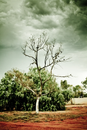 Ominousness Storm with Dark Clouds Tree and Birds Photo Drew Barrett