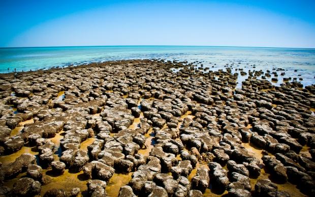 stromatolites Monkey Mia Shark Bay Western Australia. Photo Drew Barrett