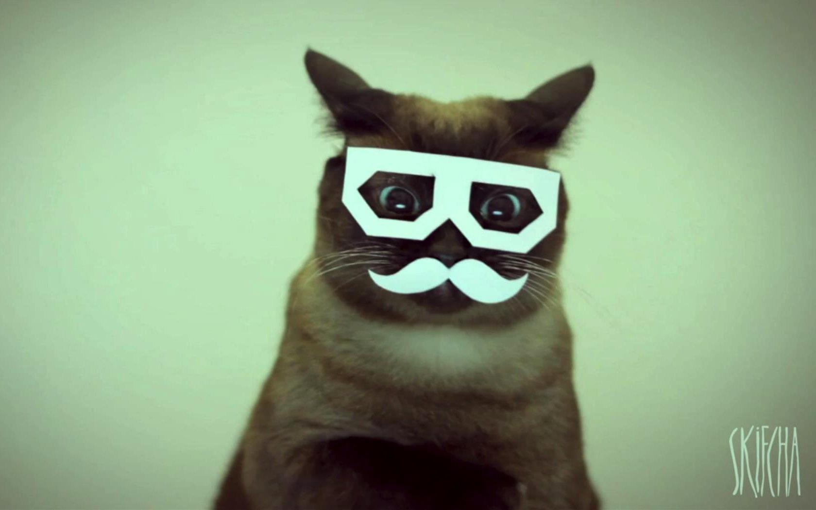 Nedm Cat Gif