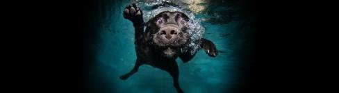 Amazing-Images-of-Dogs-Underwater-hero