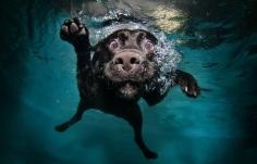 barkingbubbles