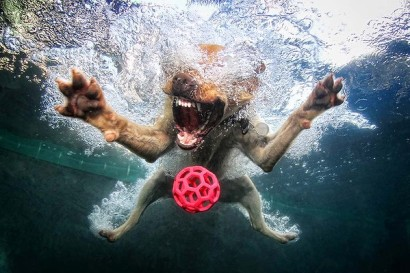 Underwater dogs_001