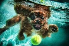 Underwater dogs_003