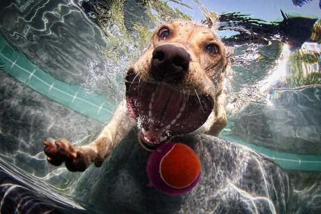 Underwater dogs_004