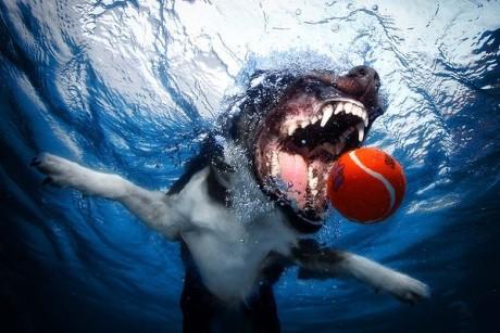 Underwater dogs_005