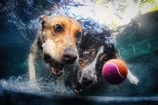 Underwater dogs_006