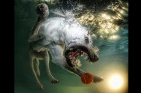 Underwater dogs_007