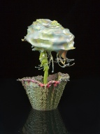 Liquid Flowers 005