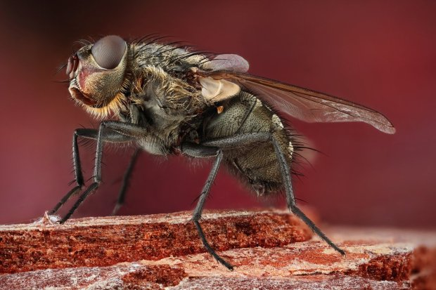 Amazing Macro Insect Photography by Dusan Beno Photos - 002