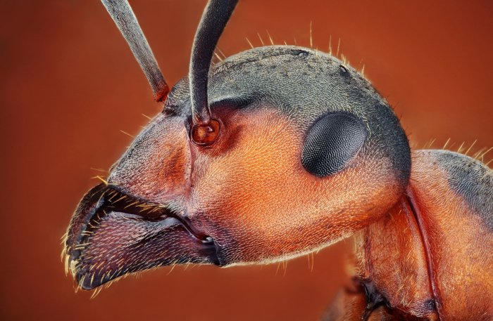 Amazing Macro Insect Photography by Dusan Beno Photos - 004