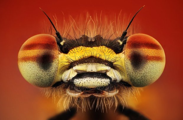 Amazing Macro Insect Photography by Dusan Beno Photos - 007
