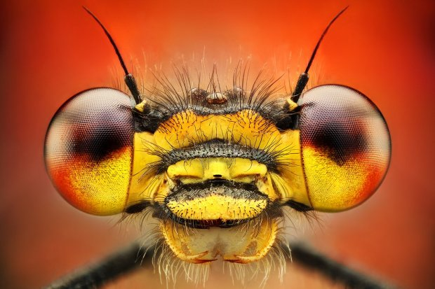 Amazing Macro Insect Photography by Dusan Beno Photos - 011