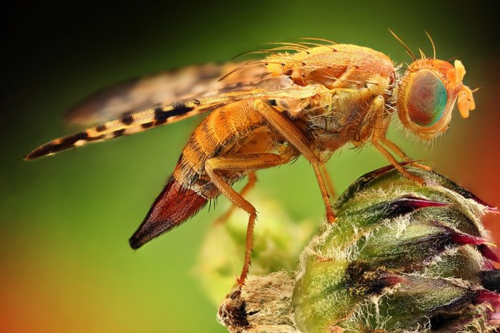Amazing Macro Insect Photography by Dusan Beno Photos - 012