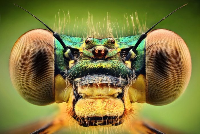 Amazing Macro Insect Photography by Dusan Beno Photos - 016