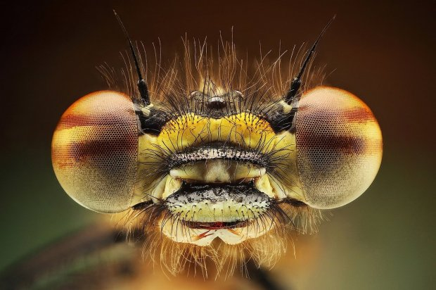 Amazing Macro Insect Photography by Dusan Beno Photos - 019