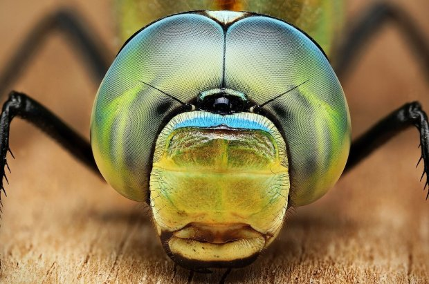 Amazing Macro Insect Photography by Dusan Beno Photos - 021