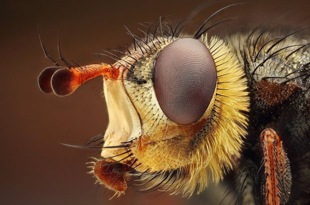 Amazing Macro Insect Photography by Dusan Beno Photos - 024