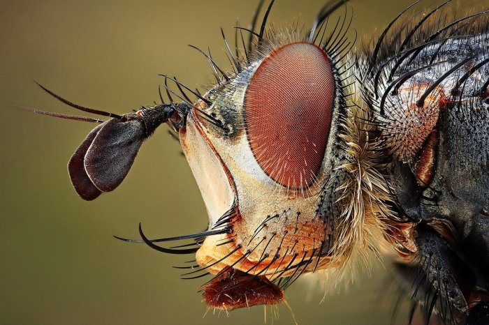 Amazing Macro Insect Photography by Dusan Beno Photos - 025