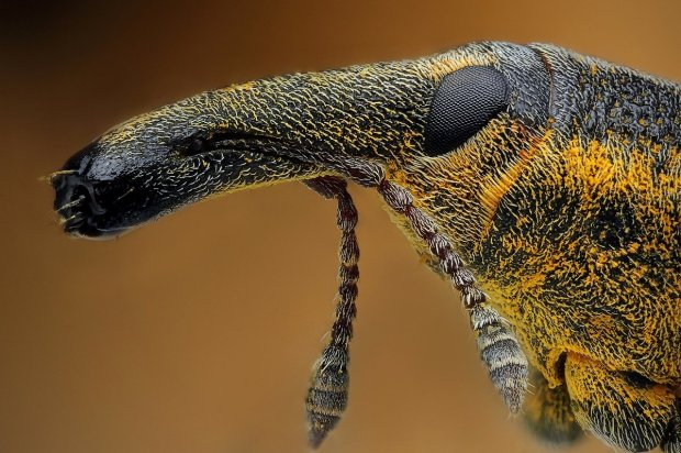 Amazing Macro Insect Photography by Dusan Beno Photos - 027