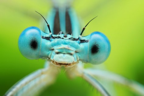 Amazing Macro Insect Photography by Dusan Beno Photos - 028