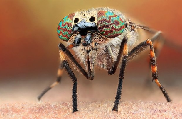 Amazing Macro Insect Photography by Dusan Beno Photos - 029