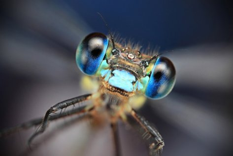 Amazing Macro Insect Photography by Dusan Beno Photos - 031