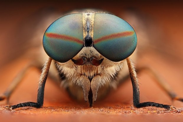 Amazing Macro Insect Photography by Dusan Beno Photos - 032