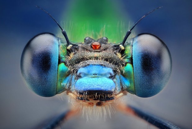 Amazing Macro Insect Photography by Dusan Beno Photos - 033