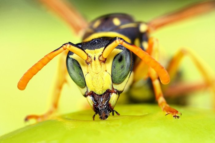 Amazing Macro Insect Photography by Dusan Beno Photos - 034
