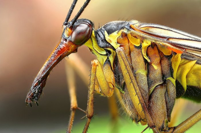 Amazing Macro Insect Photography by Dusan Beno Photos - 039