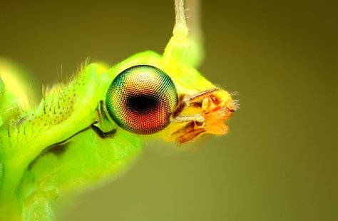 Amazing Macro Insect Photography by Dusan Beno Photos - 042