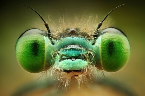 Amazing Macro Insect Photography by Dusan Beno Photos - 043