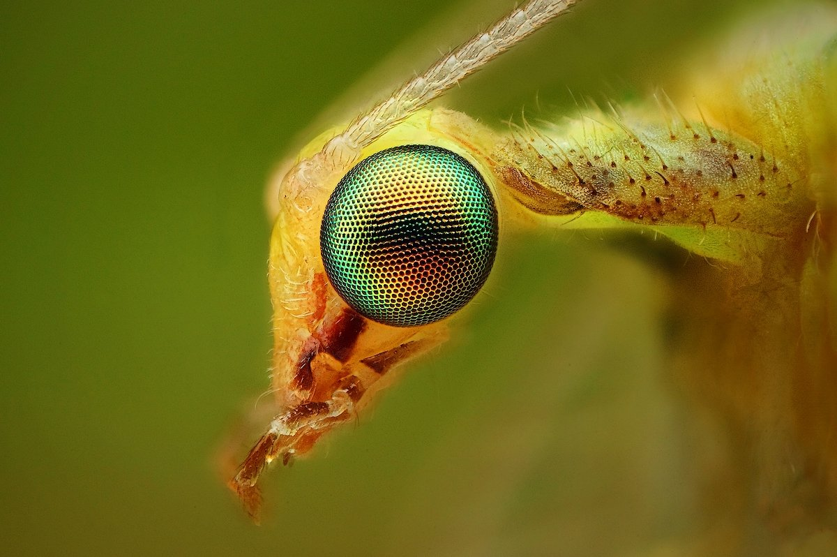 Insect Photography M