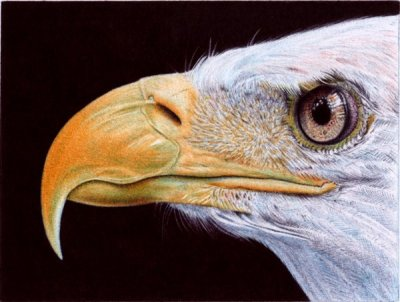 Ultra-Realistic Ballpoint Pen Drawings Look Like Photos by Samuel Silva - 010