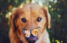 Dog Portraits That Will Take Your Breath Away 002