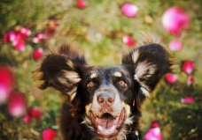 Dog Portraits That Will Take Your Breath Away 004