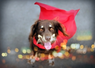 Dog Portraits That Will Take Your Breath Away 009