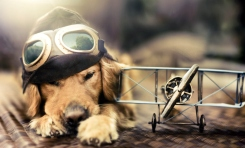 Dog Portraits That Will Take Your Breath Away 013