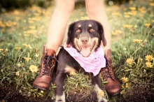Dog Portraits That Will Take Your Breath Away 022