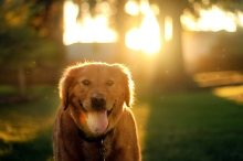 Dog Portraits That Will Take Your Breath Away 023