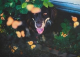 Dog Portraits That Will Take Your Breath Away 035