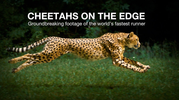 National Geographic Phantom Footage of Slow Motion Cheetah [Photography]