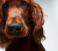 The Loving Personality Of Dogs [Photos] 004