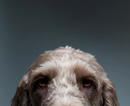The Loving Personality Of Dogs [Photos] 006