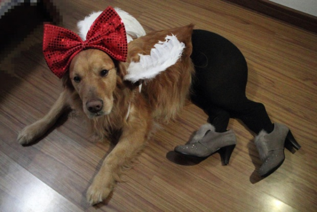 Dogs Wearing Pantyhose Latest Craze in China 14